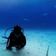 Акула-молот нападает на камеру 360